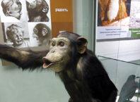 Дарвиновский музей для детей
