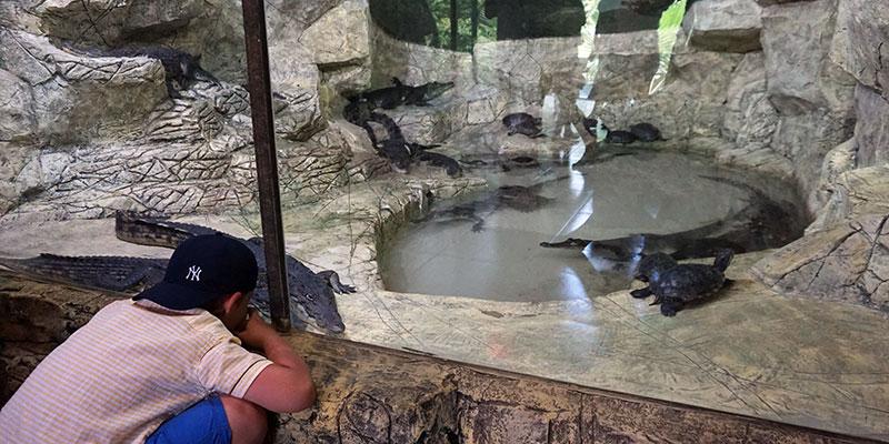 50 видов экзотических животных в зоопарке Ривьера