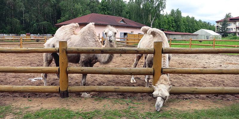 Мини-зоопарк Русское подворье