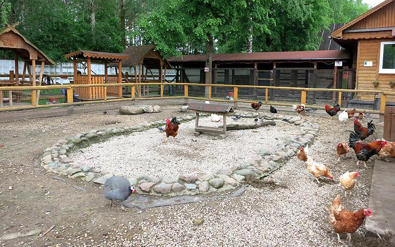 Зоопарк Ногинск