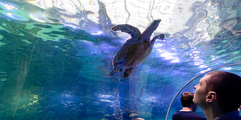 Уроки для школьников в океанариуме