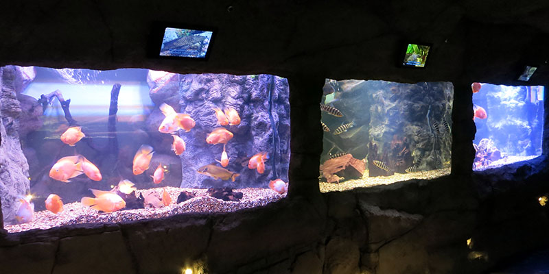 Экспозиция океанариума в Крокусе