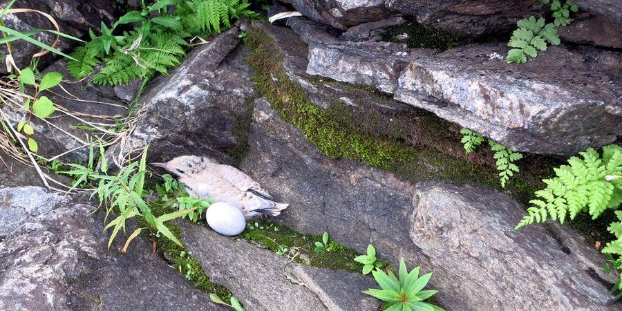 Гнездо чайки и чайчонок