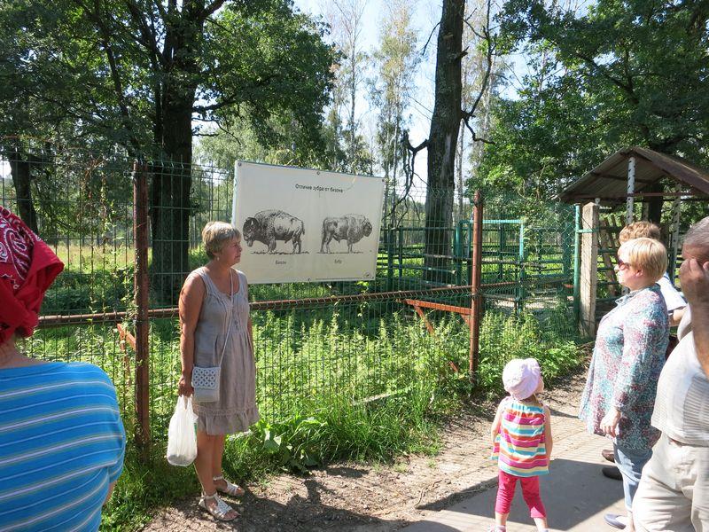Отличия зубра и бизона: слева на плакате бизон, справа зубр
