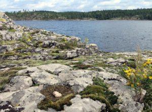 Поездка в Карелию летом 2016 года. Остров чаек в проливе Хасиансалми. Гнездо чаек