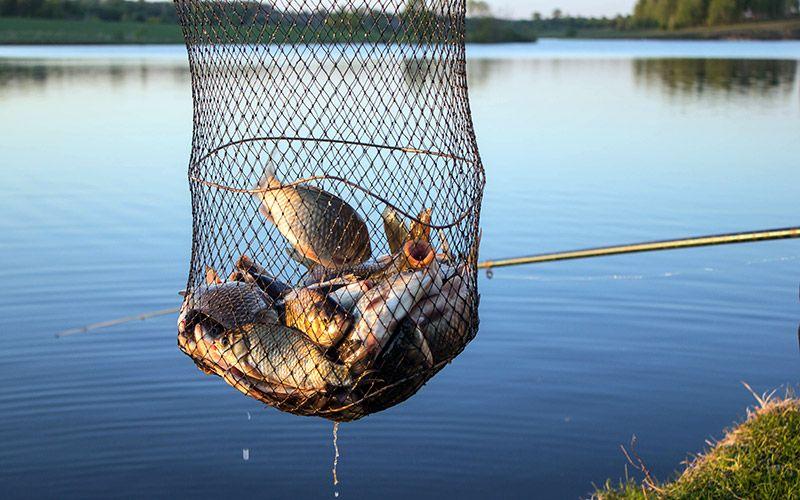 рыбалка бородино орловская область