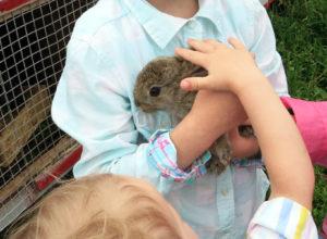 Кролик на экоферме Благословение в Орловском полесье