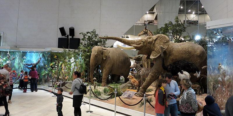 Экскурсии в Дарвиновском музее для детей
