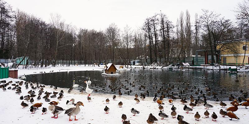 Пруд в Липецком зоопарке