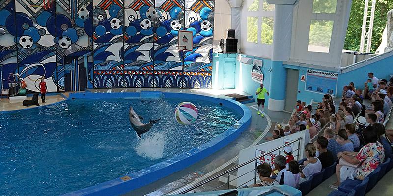 Черноморские дельфины афалины