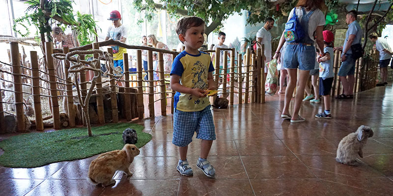 Зоопарк для детей в Сочи