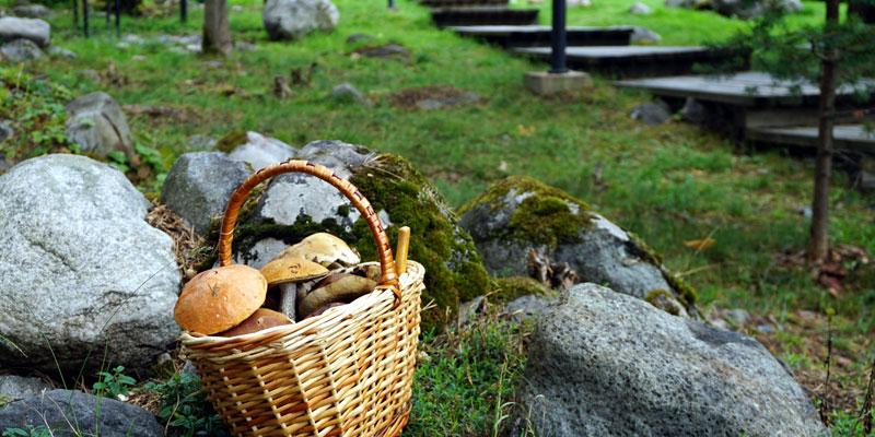 Лукошко с грибами Карелия Шуя