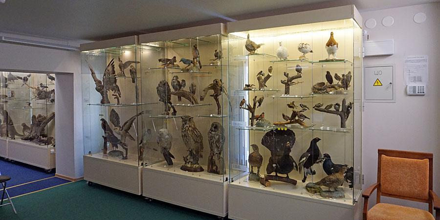 Природа Карелии в краеведческом музее Петрозаводска