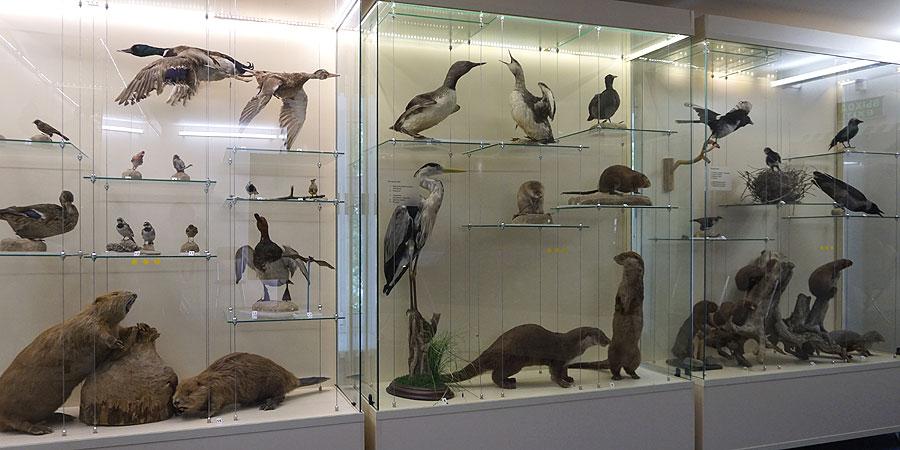 Утки чайки и птицы Карелии