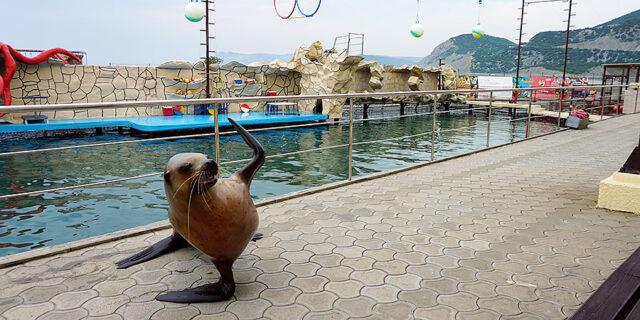 Дельфинарий в Большом Утрише Анапа