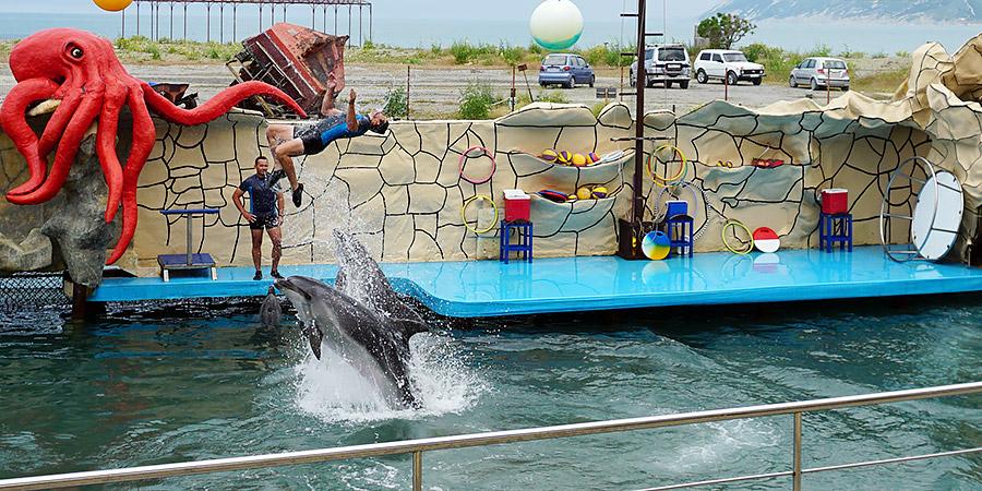 Дельфины в Большом Утрише Анапа