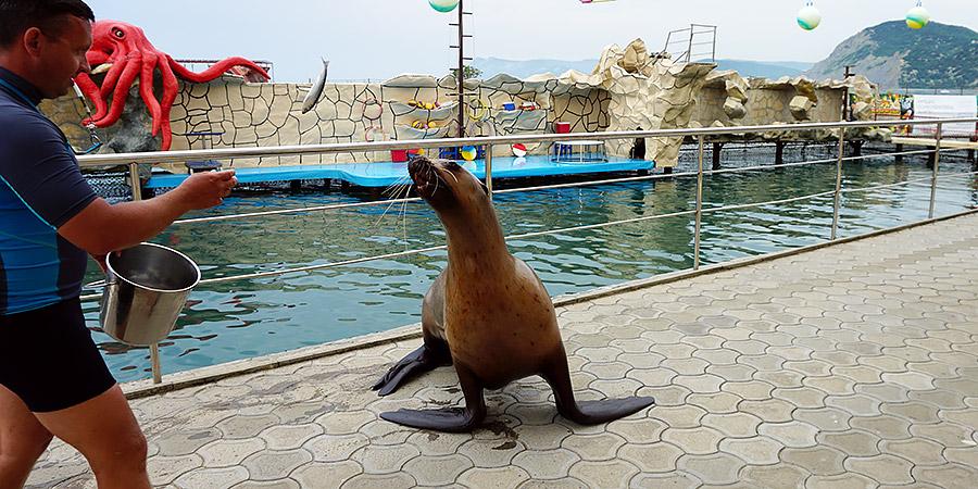 Морская львица Даша
