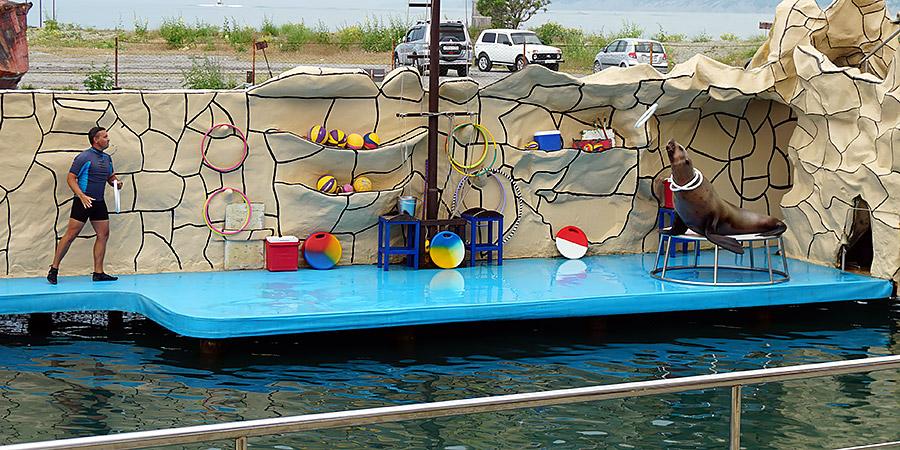 Морская львица сивуч Даша в дельфинарии Анапа Утриш