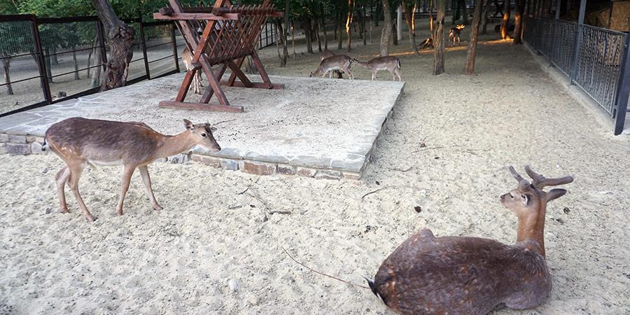 Зоопарк с животными в парке Лога