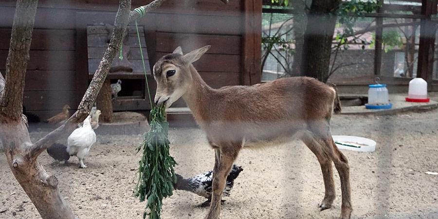 Зоопарк в парке Лога хутор Старая Станица