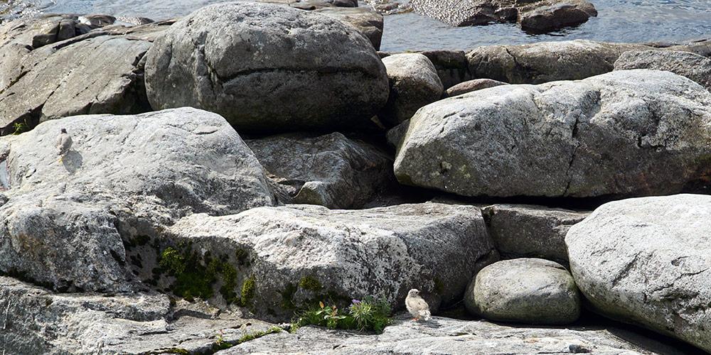 Птенцы на чаечном острове
