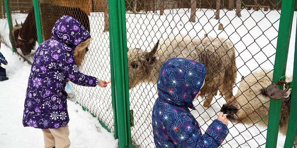 Зоопарк зимой в Орловском полесье