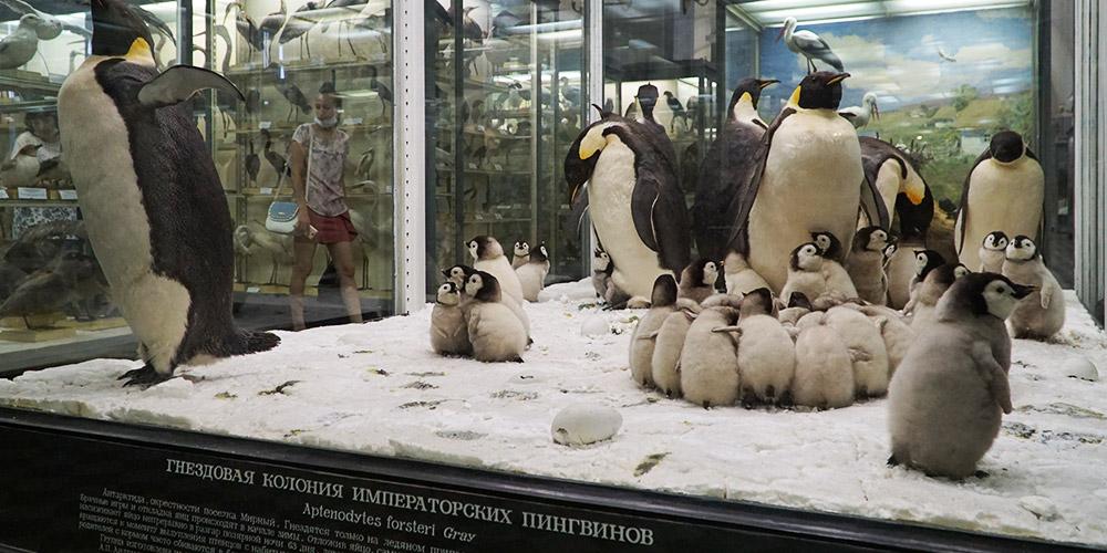 Экспозиций зоологического музея
