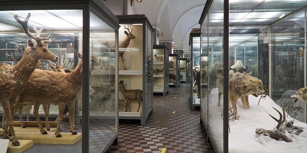Экспозиция млекопитающих животных