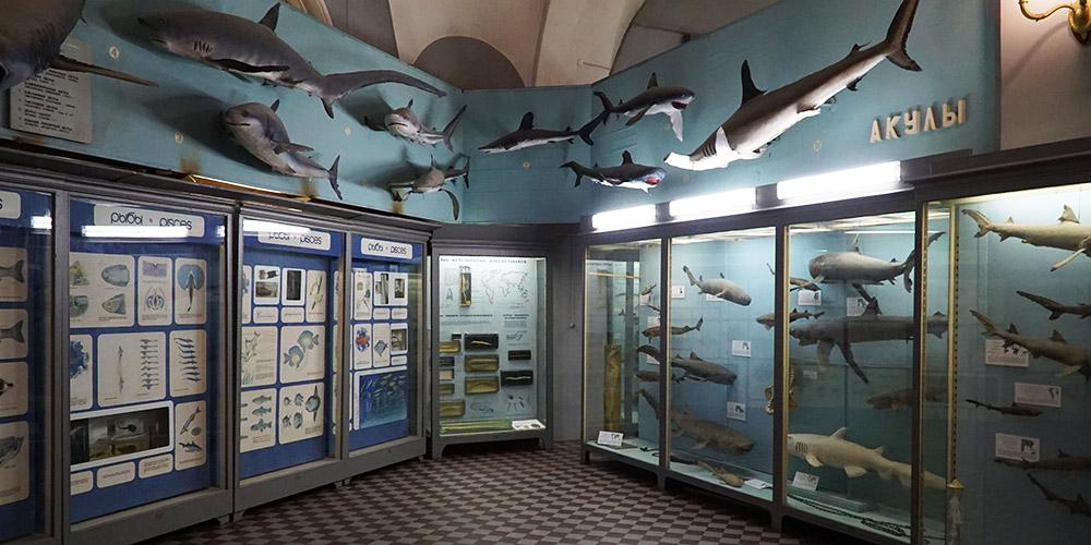 Экспозиция рыб в Зоологическом музее Санкт-Петербурга
