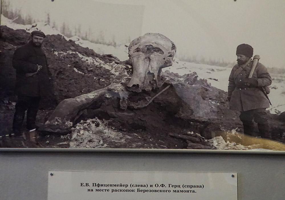 На месте раскопок Березовского мамонта