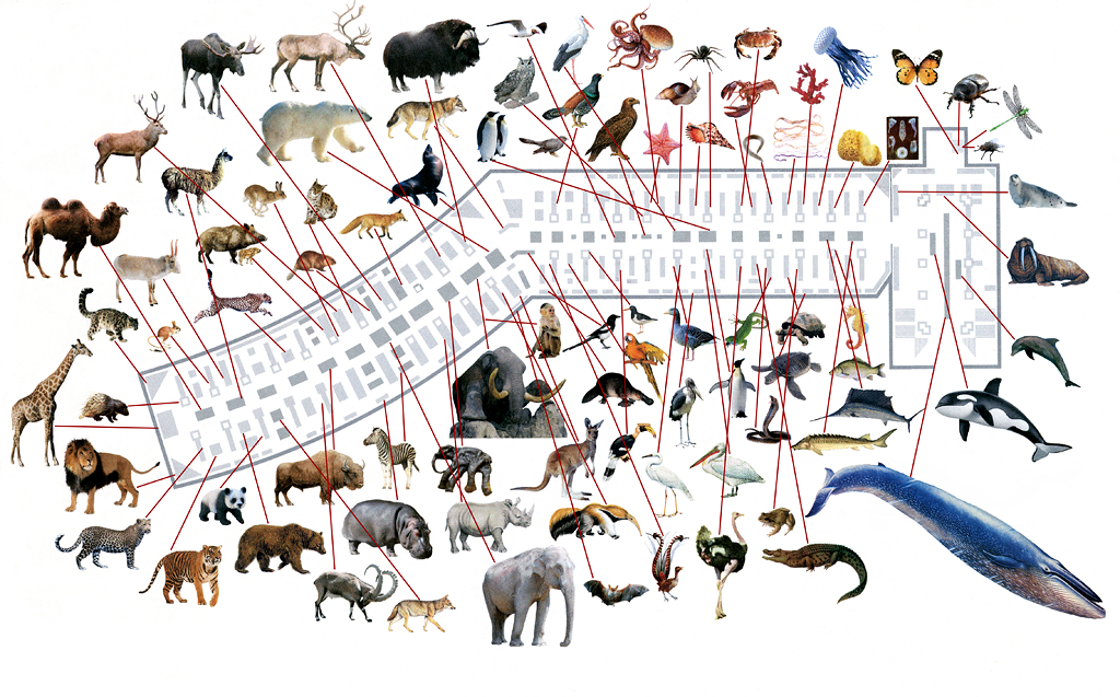 План экспозиций Зоологического музея