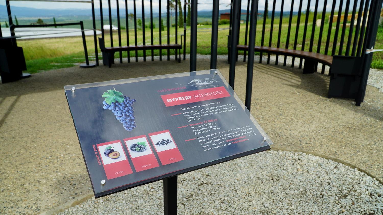 Информационные стенды с описание сортов винограда - Мурведр